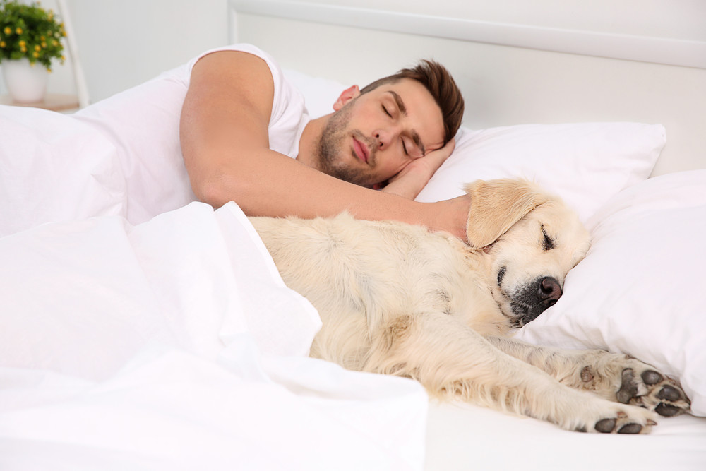 Should my dog sleep in my bed?